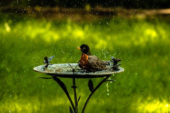 Taking a Bath by Jay Stockhaus