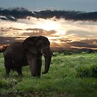 KENYA - Amboseli Game Reserve by robbtate