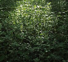 Woodland Sunlight 02 by Artberry