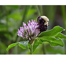 Busy busy buzz buzz Photographic Print