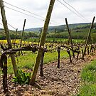 Spring in Champagne by Fran0723