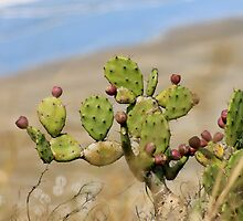 Prickly Pear  by Margaret Stanton