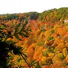 Spencer Creek valley in the fall - Hamilton, Canada by logonfire