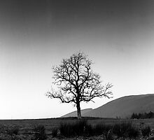 Lone Tree, Southern Upland Way, Scottish Borders by Iain MacLean