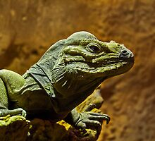 Iguana by Lee Elvin