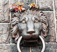 Fiery Lion by Jeffrey So