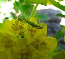 Lime Green on Yellow by MarianBendeth