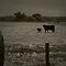 Landscape with Cow and Calf in Sepia by Corri Gryting Gutzman