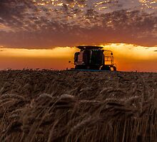 Harvest Time by Jay Stockhaus