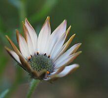Bonita flor by cristina22