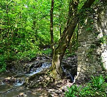 Nash Brook, Blaen-y-Cwn Nature Reserve, Monknash by Paula J James