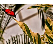 Spread Your Wings and Fly Photographic Print