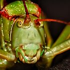 Grasshopper? up close by Colin Bester