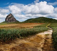 Pineapple Track by Ian  Clark