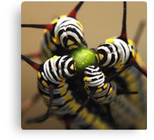 Caterpillars Canvas Print