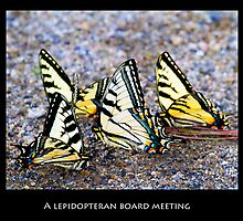 A Lepidopteran Board Meeting by Nazareth