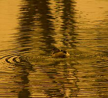 little duckling in the golden pond by ketut suwitra