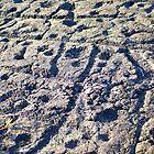 Pu'u Loa Petroglyphs by Loisb
