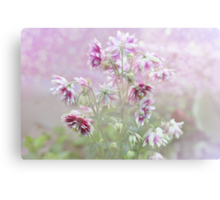 Columbine beauty Canvas Print