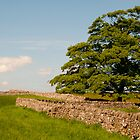 Tree n Walls by David J Knight