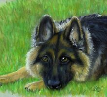 German Shepherd by Sharon Herbert