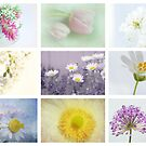 Collage of spring by Yool