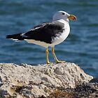 BIG BIRD by Rocksygal52