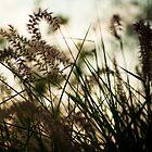 Grass by cyasick