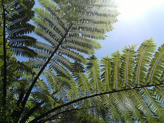Ferns Across a Blue Sky by cadellin