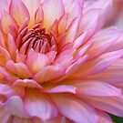 ***  FOREVER YOURS ~ PINK DAHLIA *** by JETAdamson