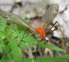 Cranefly Hostess by Carla Wick/Jandelle Petters