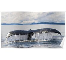Whale Tail Poster