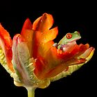 Red eyed tree frog baby by AngiNelson