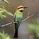 Rainbow Bee-eater by Kerryn Ryan, Mosaic Avenues