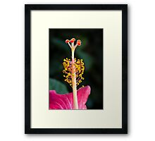 Hibiscus Stigma Close Up Framed Print