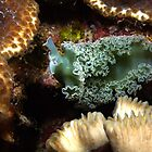Lettuce Nudibranch by KSBailey