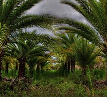 Palm Plantation by Lori Deiter