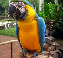 Macaw by dher5