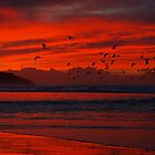 Birds in red by geophotographic