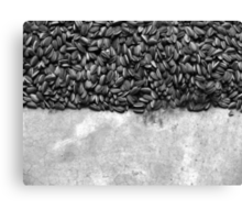 Sunflowers by Ai Weiwei Canvas Print