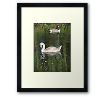 Goose and Swan Framed Print