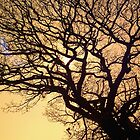 Fractal Branches by Phil Rhodes