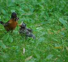 Feeding Baby Robin by Karen Checca