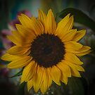 Sunflower by Andrea Rapisarda