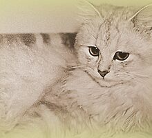 Memories Of My Kitty by Evita