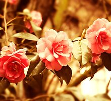 Vintage Roses by Magdalena Warmuz-Dent