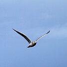 Seagull 6 by Larry Kohlruss