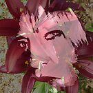 Blossom by Adrena87
