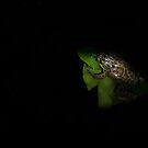 Frog! by vasu