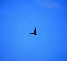 Come fly with me by MatthewMPhotos